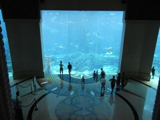aquarium-viewed-from